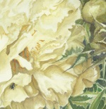 Close up of Peony and thistle
