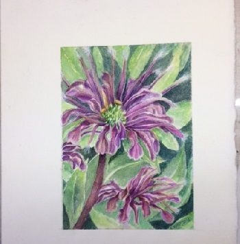 Bee Balm or Monarda watercolor Painting