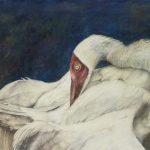 Siberian Crane in Threat Stance