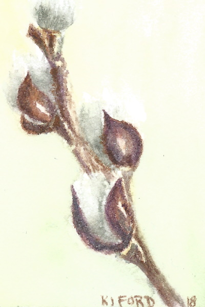 Tiny watercolor of a pussy willow