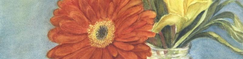 A gerbera daisy