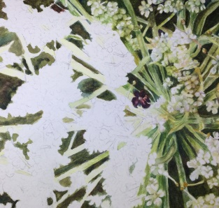 Watercolor close up of Queen Anne's Lace Progess 05 Sep 2018