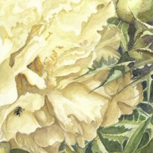 peonies and thistles