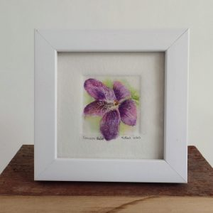 An original watercolor painting of the Wisconsin state flower the Common Violet in a four by four inch white frame.