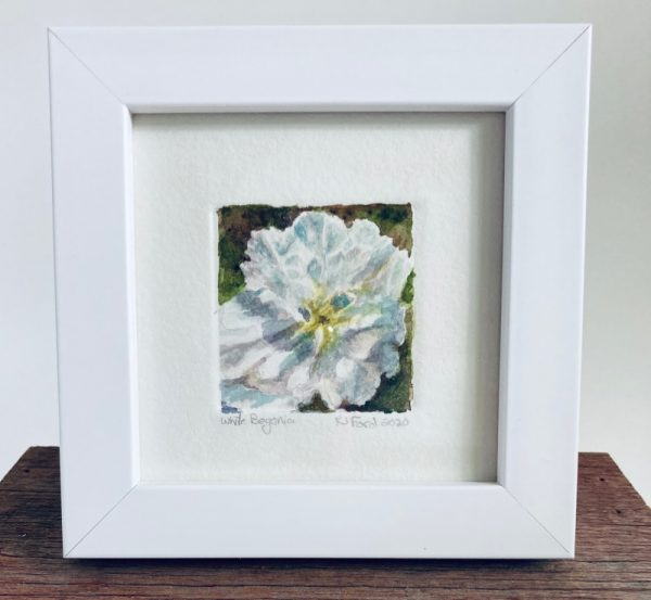 A tiny wonder original watercolor painting of a white begonia