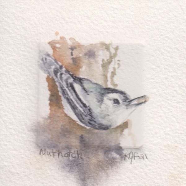 A tiny wonder painting of a nuthatch with seed in beak painted within the embossed section of the watercolor paper.